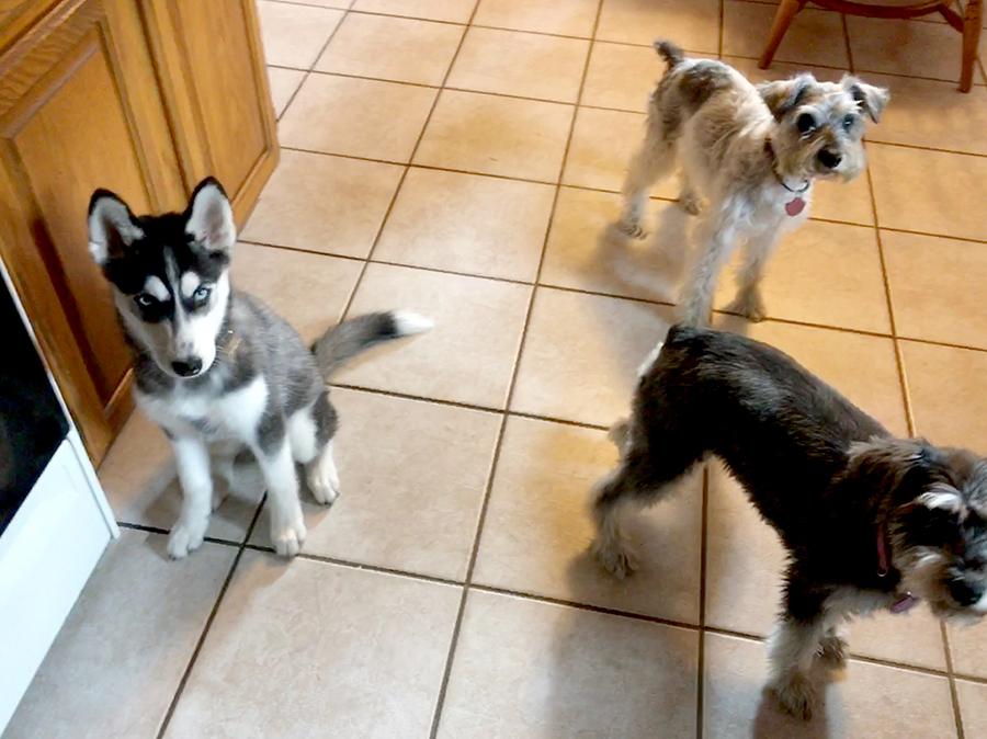 3 dogs inside